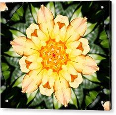 Yellow Rose Kaleidoscope  Acrylic Print by Cathie Tyler
