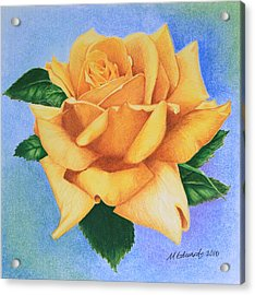 Acrylic Print featuring the drawing Yellow Rose by Marna Edwards Flavell