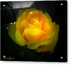Yellow Rose Acrylic Print by Miriam Shaw