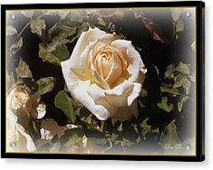 Yellow Rose Of Texas Acrylic Print by Trina Prenzi