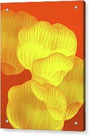 Yellow Rose Petals Falling In The Garden Acrylic Print by Amy Vangsgard