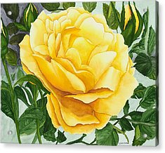 Yellow Rose Acrylic Print by Robert Thomaston