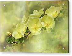 Yellow Roses Acrylic Print by Elaine Manley