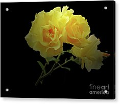Yellow Roses On Black Acrylic Print
