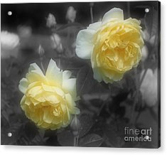 Yellow Roses Partial Color Acrylic Print by Smilin Eyes Treasures