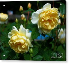 Yellow Roses Acrylic Print by Smilin Eyes  Treasures