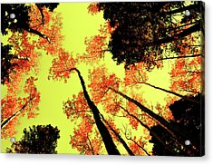 Acrylic Print featuring the photograph Yellow Sky, Burning Leaves by Kevin Munro