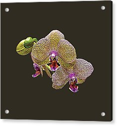 Yellow Spotted Orchid Acrylic Print by Susan Savad