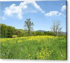 Yellow Spring Acrylic Print by Susan Leggett