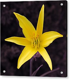 Yellow Star Acrylic Print