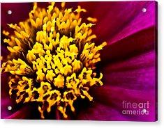 Yellow Stars Burst Acrylic Print