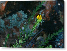Yellow Stretching Acrylic Print
