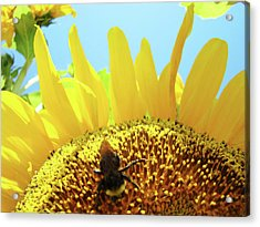 Yellow Sunflower Art Prints Bumble Bee Baslee Troutman Acrylic Print by Baslee Troutman