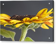 Yellow Sunflower Fine Art Wall Decor Acrylic Print