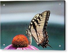 Yellow Swallowtail II Acrylic Print