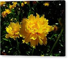 Yellow Symphony Acrylic Print by Edan Chapman
