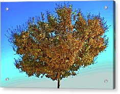 Yellow Tree Blue Sky Acrylic Print