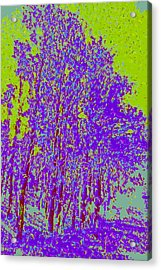 Yellow Trees D4 Acrylic Print by Modified Image