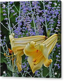 Yellow Trumpets Acrylic Print by Janis Nussbaum Senungetuk