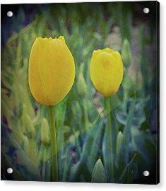 Yellow Tulip Art Acrylic Print