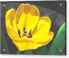 Yellow Tulip Acrylic Print by Catherine G McElroy