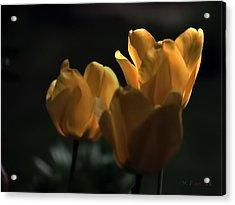 Acrylic Print featuring the photograph Yellow Tulip Spotlight by Michael Flood