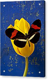 Yellow Tulip With Orange And Black Butterfly Acrylic Print