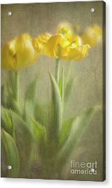 Acrylic Print featuring the photograph Yellow Tulips by Elena Nosyreva