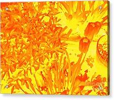 Yellow Tulips  Acrylic Print by John  Bichler