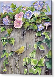 Yellow Warbler And Morning Glory Acrylic Print