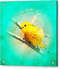 Acrylic Print featuring the photograph Yellow Warbler by John Wills