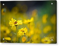 Acrylic Print featuring the photograph Yellow Wild Flowers by Kelly Wade