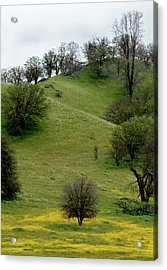 Yellow Wildflowers And Oak Trees Acrylic Print