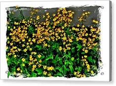Yellow Wildflowers Acrylic Print by Marsha Heiken