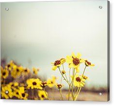 Acrylic Print featuring the photograph Yellow Wildflowers by Mary Hone