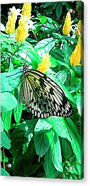 Yellow Zone Acrylic Print by Mario Perez