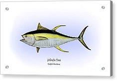 Yellowfin Tuna Acrylic Print by Ralph Martens