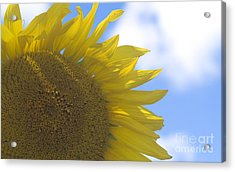 Yellowness Creates Happyness  Acrylic Print by Tara Lynn