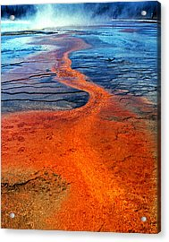 Yellowstone 1 Acrylic Print