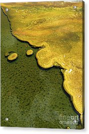 Yellowstone Art. Yellow And Green Acrylic Print