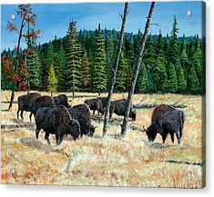 Yellowstone Grazers Acrylic Print