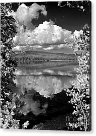 Yellowstone Lake Acrylic Print by Diane E Berry