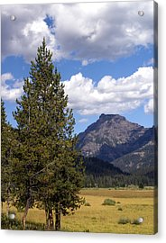 Yellowstone Landscape Acrylic Print by Marty Koch