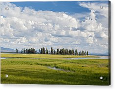 Yellowstone Meadow Acrylic Print