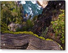 Yellowstone Moss Acrylic Print by Patrick  Flynn