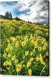 Yellowstone Yellow Acrylic Print