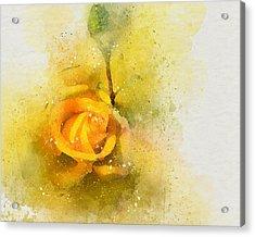 Yelow Rose Acrylic Print