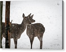 Yep, It's Snowing - Deer In The Snow Acrylic Print
