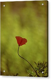 Yet She Persisted Acrylic Print