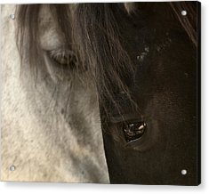 Ying And Yang Acrylic Print by Ron  McGinnis